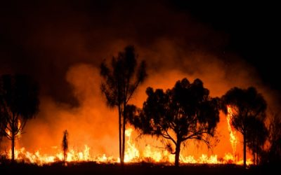Bushfires 2020: Shipping Containers To The Rescue